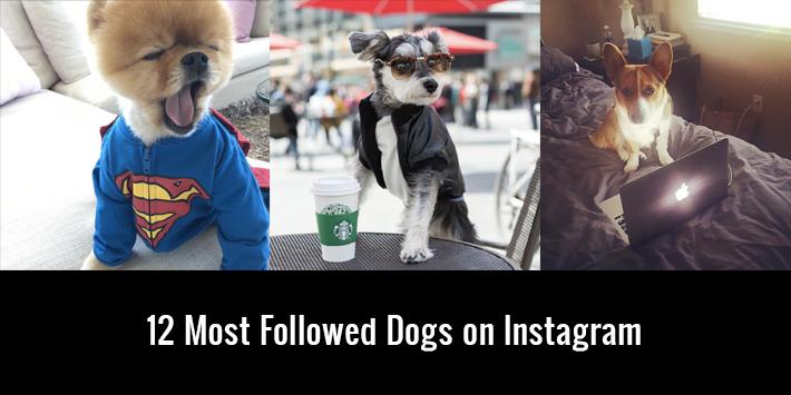 12 Most Followed Dogs on Instagram
